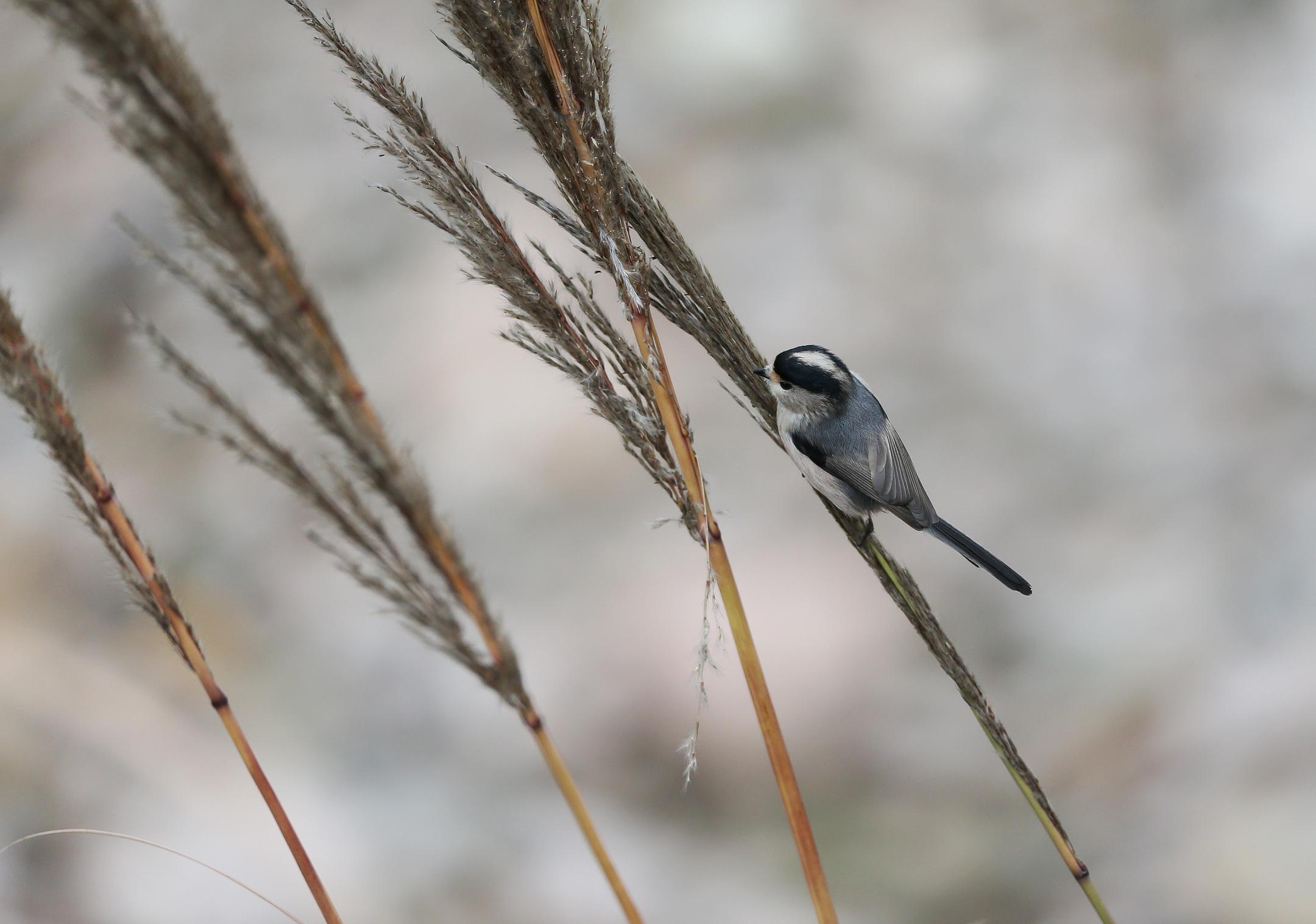[随手拍] 可爱的小鸟(组照)[复制链接]