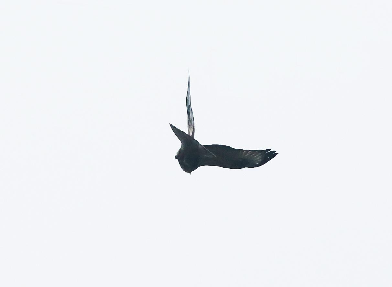 雄鹰展翅高飞免抠png素材图片
