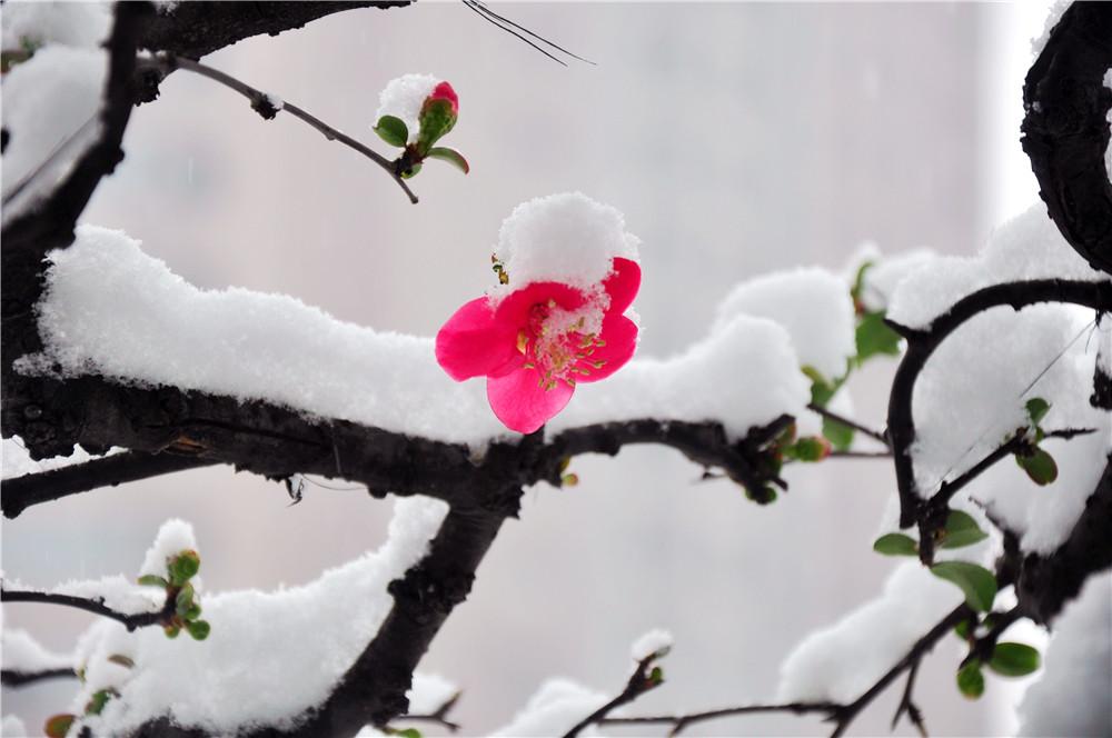 雪戒花竖笛乐谱