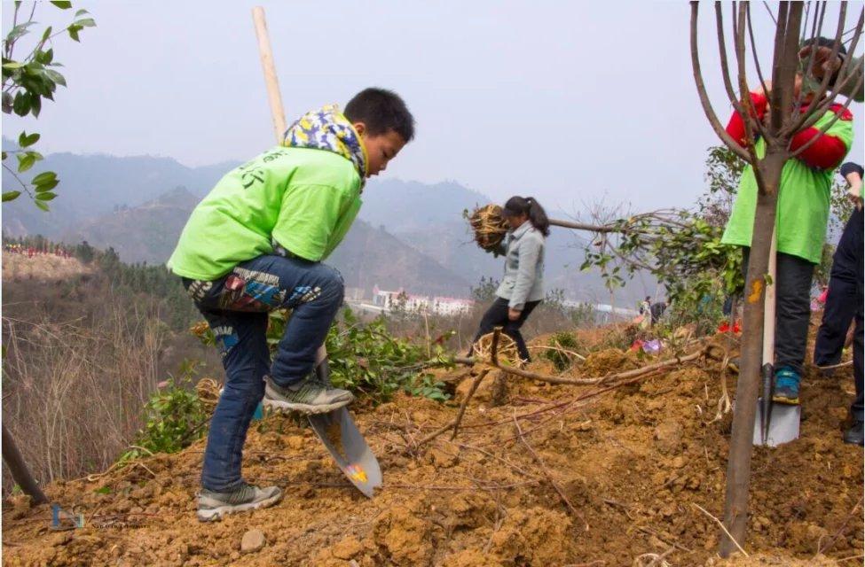 十堰市 开展2017植树节活动,大量招募志愿者