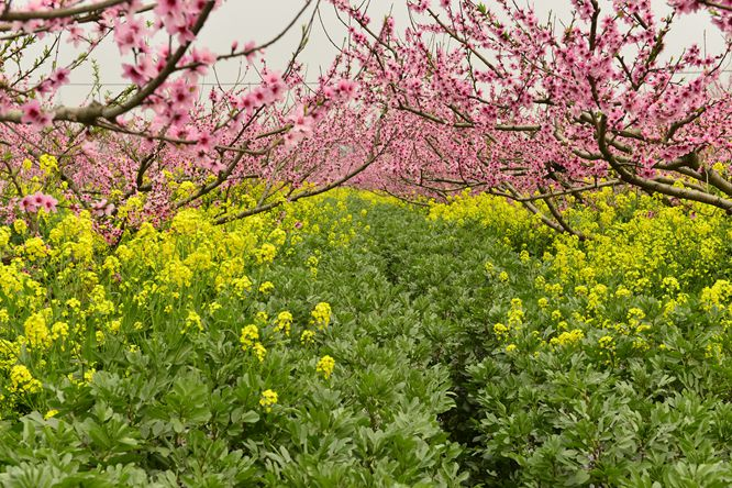 【春】三生三世桃花缘