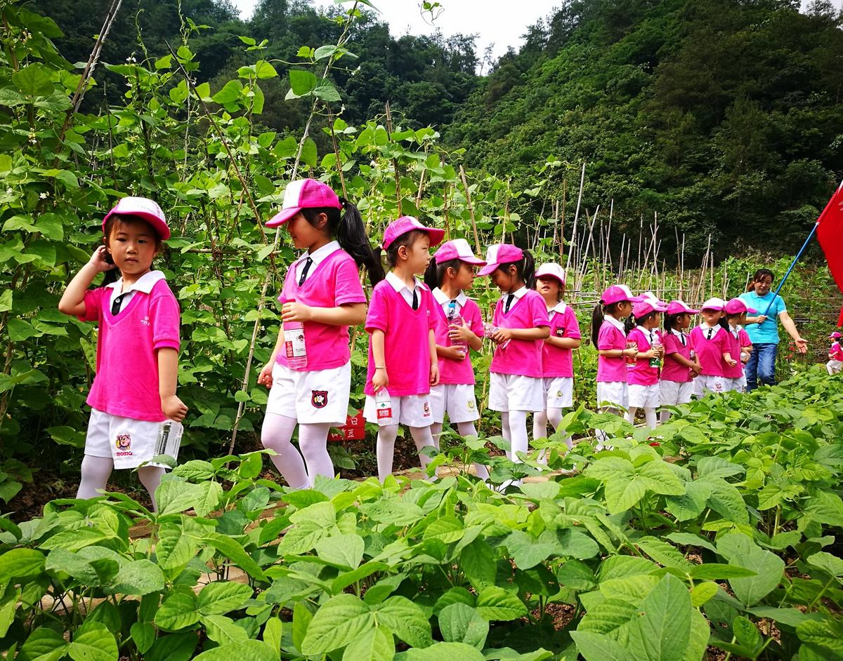 行走在田间的孩子们.jpg