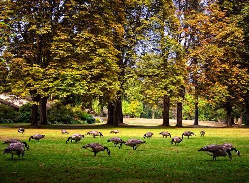 加拿大史丹利公园旅游2.jpg