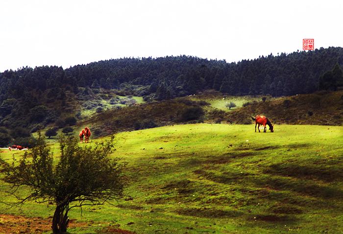 仙女山上草原牧场