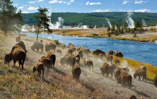 美国黄石国家公园旅游2.jpg